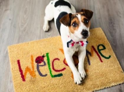 Jak czuwać nad psem, gdy przychodzą goście?