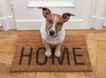 Jak dbać o dom, w którym mieszkają zwierzęta?