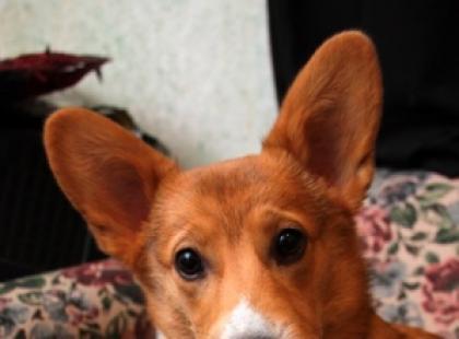 Większość psów posiada bardzo mocno ujawniające się cechy charakterystyczne, które mają znaczenie jeśli wybieramy psa do domu.
