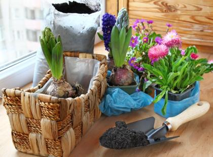Jak dbać o kwiaty doniczkowe?