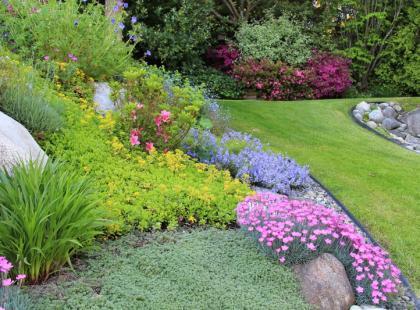 Jak dbać o kwiaty skalne?