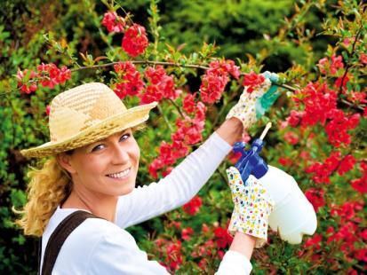 Jak dbać o kwitnące drzewa i krzewy?