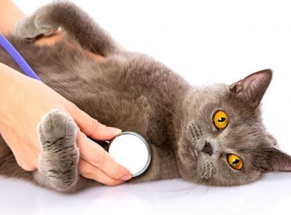 Jak dbać o zdrowie kota?