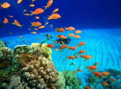 Jak dobierać rybki do akwarium?