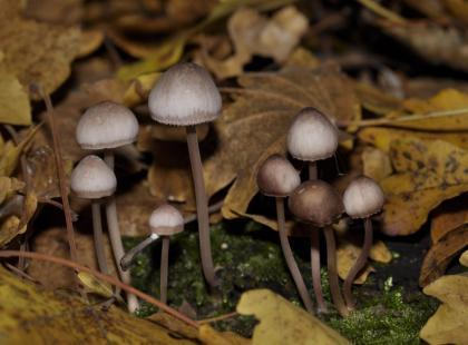 Jak działają LSD i grzyby halucynogenne?