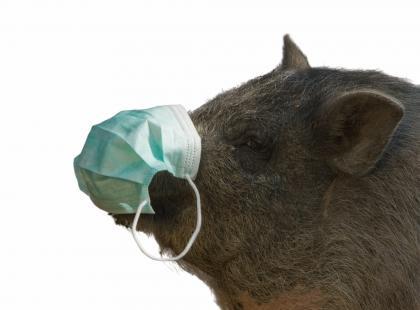 """Jak groźna jest pandemia """"świńskiej"""" grypy?"""