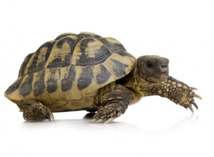 Jak karmić żółwia?