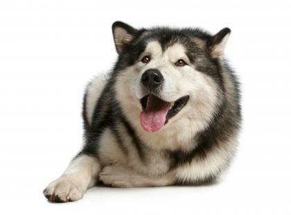 Jak leczyć nowotwór żołądka u psa?