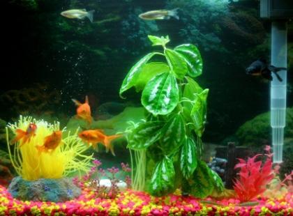 Jak należy pielęgnować rybki?