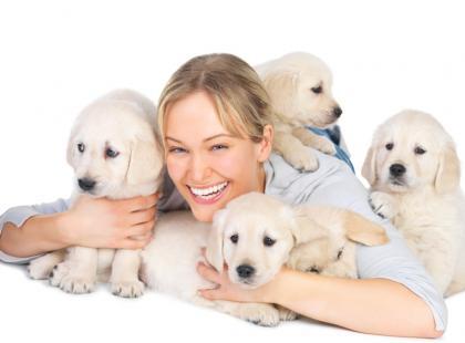 Jak nauczyć psa podstawowych komend? Doskonalenie sztuczek