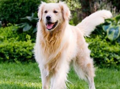"""Jak nauczyć psa podstawowych komend? Komenda """"siad"""""""