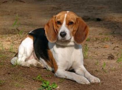 """Jak nauczyć psa podstawowych komend? Komenda """"waruj zostań"""""""