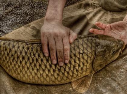 Jak nie męczyć karpia i zjeść wigilijną rybę?