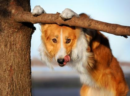 """Jak obliczyć wiek psa? Sprawdź, ile """"ludzkich"""" lat ma twój pupil!"""