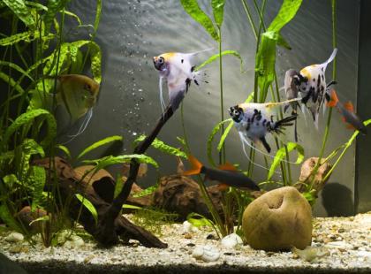 Jak oczyścić akwarium?
