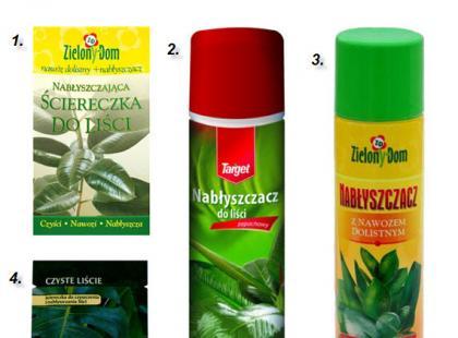 Jak odkurzyć domowe rośliny?