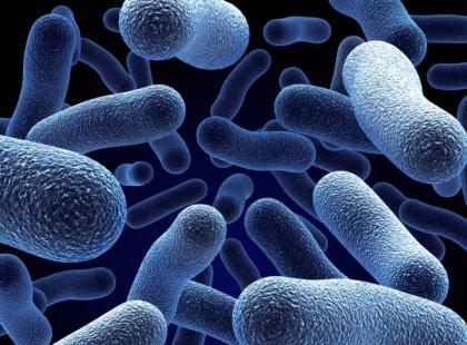"""Jak odróżniamy złe bakterie od """"dobrych""""?"""