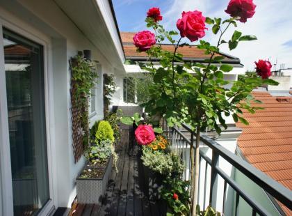 Jak pielęgnować róże na balkonie?