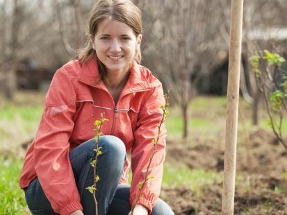 Jak pielęgnować świeżo zasadzone krzewy?