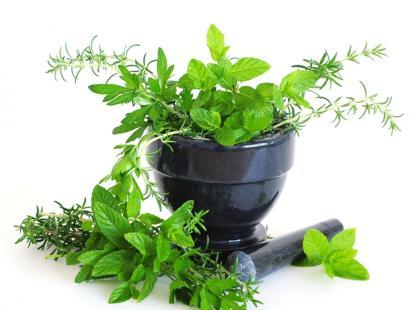 Jak pielęgnować zioła jesienią?