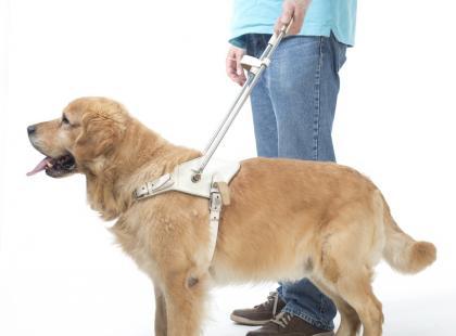 Jak pies przewodnik pomaga osobie niewidomej?