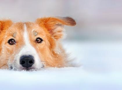 Jak pomóc psu przetrwać zimę?