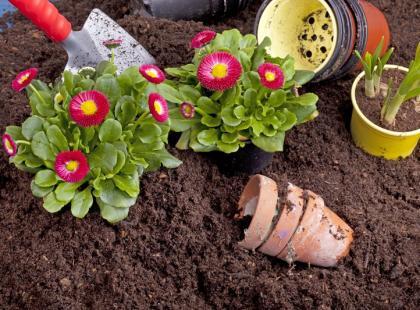 Jak poprawić jakość gleby w ogrodzie?