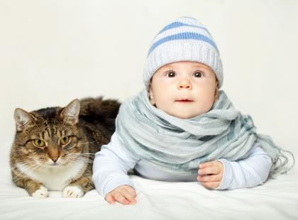 Jak poprawnie obchodzić się z kotem?