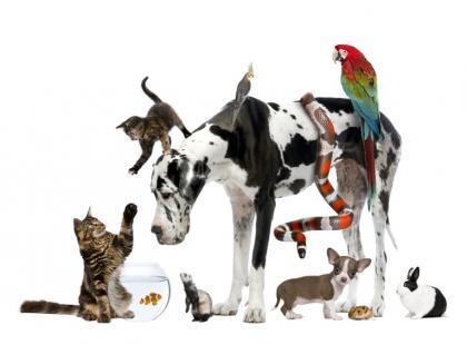 Jak postępować w przypadku alergii na zwierzęta?