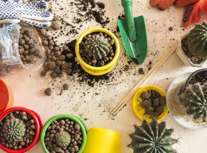 Jak prawidłowo przesadzać rośliny doniczkowe?