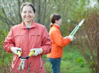 Jak przycinać drzewka i krzewy owocowe?