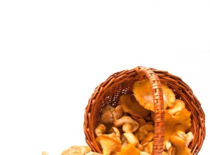 Jak przygotować kurkówkę - nalewkę z kurek?