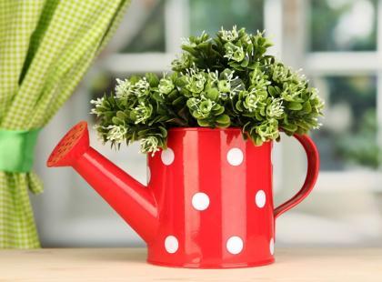 Jak przygotować kwiaty domowe do urlopu?