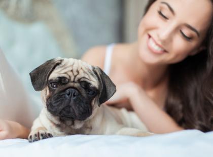 Jak przygotować psa na rozłąkę z właścicielem?