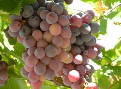Jak przyrządzić gazpacho z winogronami zgodnie z feng shui?