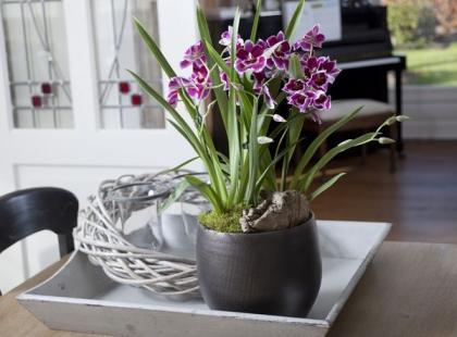 Jak rozmnażać kwiaty doniczkowe?