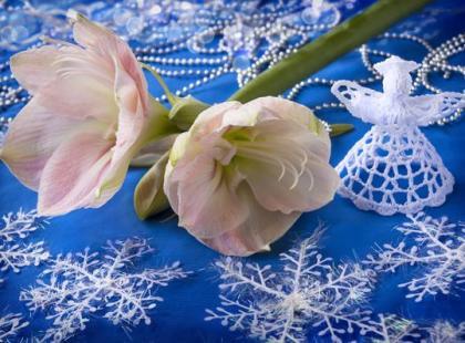 Jak sprawić, by zwartnica zakwitła na święta?