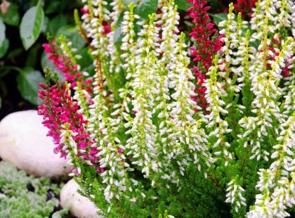 Jak stworzyć piękne kompozycje kwiatowe w ogrodzie?