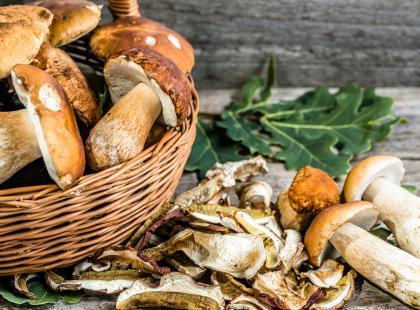 Jak suszyć grzyby - 5 najważniejszych zasad