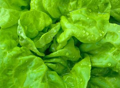 Jak szybko odwirować sałatę?