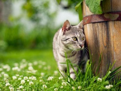 Jak usunąć kleszcza u kota?
