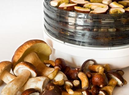 Jak wybrać najlepszą suszarkę do grzybów? RANKING TOP 5