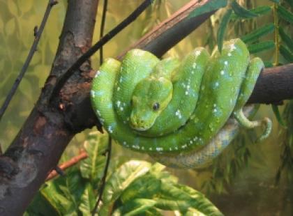 Jak wybrać węża do hodowli?