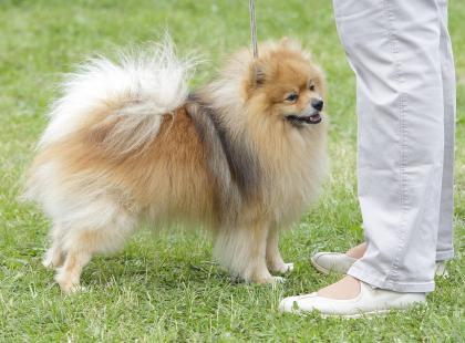 Jak wychować grzecznego psa – 7 zasad