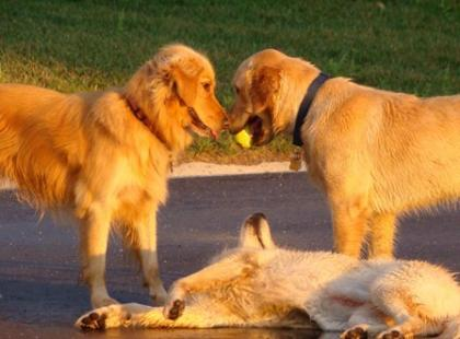 Jak wychowywać psa w mieście?