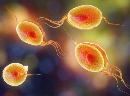 Jak wykryć chorobę pasożytniczą?