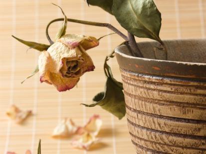 Jak wyleczyć chore kwiaty?