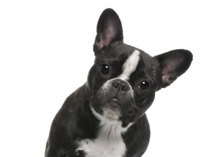 Jak wzmocnić odporność psa jesienią?
