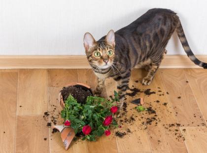 Jak zabezpieczyć doniczki przed kotem? Kilka rad, dzięki którym twoje roślinki nie ucierpią!