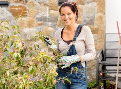 Jak zabezpieczyć kwiaty przed zimnem?